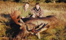 48 Inch Atna lake Bull moose