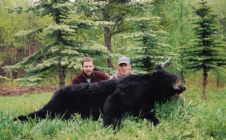 Don's 6 and a half foot Black Bear