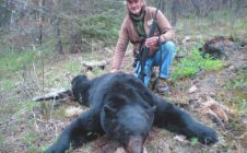 2012 6 and a half foot Black Bear