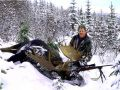 Trophy British Columbia Bull Moose Hunting - Nanikalakeoutfitters.com