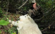 Fly-In BC Mountain Goat Hunts - Nanikalakeoutfitters.com