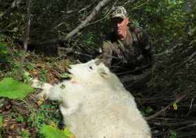 Mountain Goat Hunts